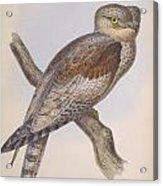Owl Steanorninae Acrylic Print