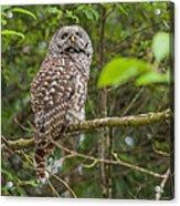 Up - Owl Acrylic Print