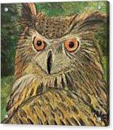 Owl With Orange Eyes Acrylic Print