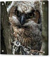 Owlet On The Watch Acrylic Print