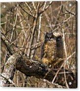 Owlets Acrylic Print