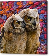 Owlets In Color Acrylic Print
