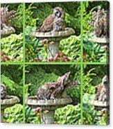 Owls Do Take Baths Acrylic Print
