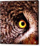 Owl's Eye Acrylic Print