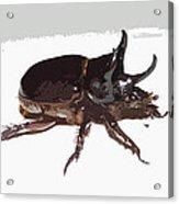 Ox Beetle Abstract Acrylic Print