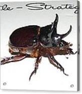 Ox Beetle Acrylic Print