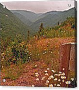 Ox-eye Daisies On Skyline Trail In Cape Breton Highlands Np-ns Acrylic Print