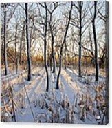 Oxbow Park Golden Hour Acrylic Print