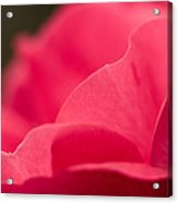P Is For Pink Acrylic Print