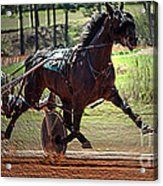 Pacer Acrylic Print