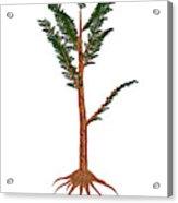 Pachypteris Prehistoric Plant Acrylic Print