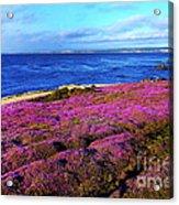 Pacific Grove California Coast Acrylic Print