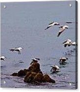 Pacific Landing Acrylic Print