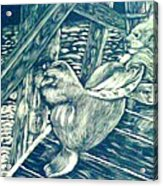 Pacific Sea Lions Acrylic Print