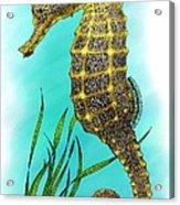 Pacific Seahorse Acrylic Print
