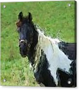 Paint Horse In Field Acrylic Print