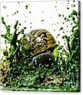 Paint Sculpture And Snail 3 Acrylic Print