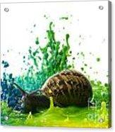 Paint Sculpture And Snail 4 Acrylic Print