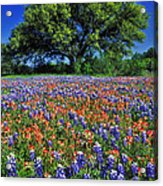 Paintbrush And Bluebonnets - Fs000057 Acrylic Print by Daniel Dempster