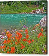 Paintbrush By Bow River In Banff Np-ab Acrylic Print