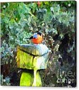 Painted Bullfinch S1 Acrylic Print