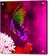 Painted Buterfly Acrylic Print