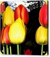 Painted Country Tulips Acrylic Print