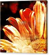 Painted Daisy Acrylic Print