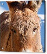 Painted Donkey 1 Acrylic Print