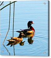Painted Ducks Acrylic Print