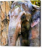 Painted Elephant Acrylic Print