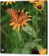 Painted Lady With Friends Acrylic Print