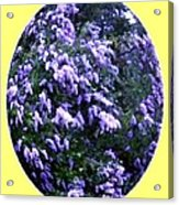 Painted Lilacs Acrylic Print