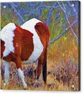 Painted Marsh Mare Acrylic Print