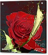 Painted Rose Acrylic Print by M Montoya Alicea