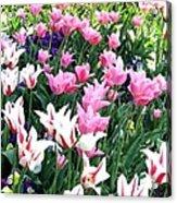 Painted Spring Exhibit Acrylic Print