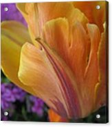 Painted Tulip Acrylic Print