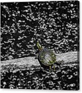 Painted Turtle In A Monochrome World Acrylic Print