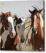 Painted Wild Horses Acrylic Print
