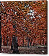 Painterly Style Autumn Trees Acrylic Print