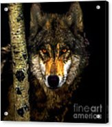 Painting ... Wolf In Aspen Grove Acrylic Print