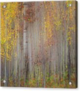 Painting Of Trees In A Forest In Autumn Acrylic Print