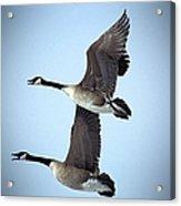 Pair In Flight Acrylic Print