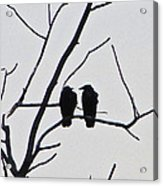 Pair Of Birds In Black Acrylic Print