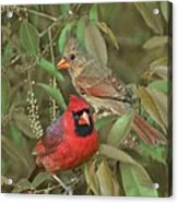 Pair Of Cardinals Acrylic Print