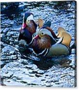 Pair Of Male Mandarin Duck-signed-#8236 Acrylic Print