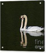 Pair Of Mute Swans Acrylic Print