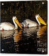 Pair Of Pelicans   #6935 Acrylic Print