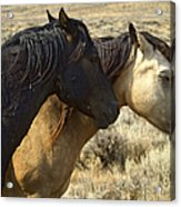 Pair Of Wild Mares   #0469 Acrylic Print
