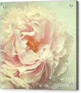 Pale Beauty Acrylic Print